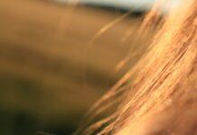włosy, pielęgnacja włosów, jak dbać o włosy, jak pielęgnować włosy, piękne włosy, zadbane włosy,